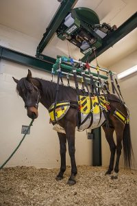 A Lift For Horse Broken-Leg Recovery