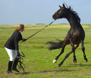 Methods Of Horse Training